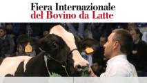 https://www.bravosrl.it/wp-content/uploads/2016/06/Sito-Homepage-Fiere-Zootecniche_71-bovino-ita-1024x670-213x120.png